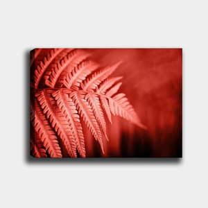Nástěnný obraz na plátně Tablo Center Palm, 40 x 60 cm